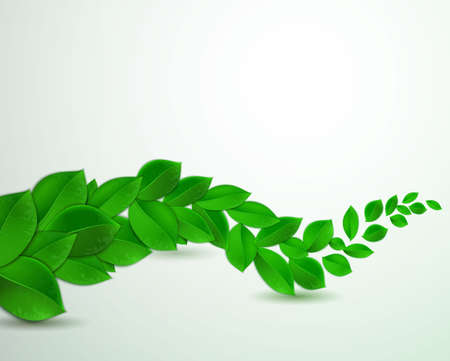 green leaves on a white background, Vector illustration of ecology concept.  Eco Concept with glossy fresh green leaves