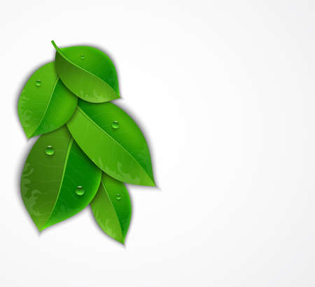 greenness: green leaves on a white background, Vector illustration of ecology concept.  Eco Concept with glossy fresh green leaves  with drops of water