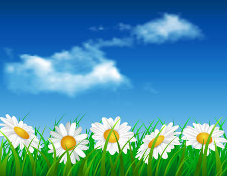 daisy vector: daisy vector background summer design flower green garden nature illustration. Spring background with grass