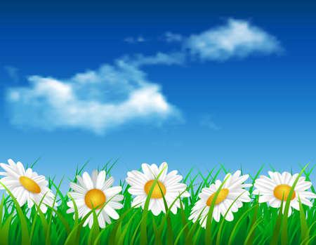 margarita ejemplo de la flor diseño de la naturaleza verde jardín de fondo vector verano. Fondo del resorte con la hierba Ilustración de vector