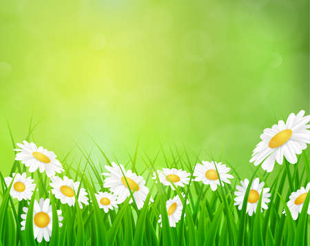 daisy vector: daisy vector background summer design flower green garden nature illustration. Spring background with grass, daisies and bokeh lights. Illustration