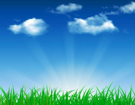 daisy vector: daisy vector background summer design green garden nature illustration. Spring background with grass