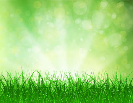 morning dew: Beautiful spring background with grass and bokeh lights. vector background summer design  green garden nature illustration. morning sunlight grass early dew. eco background Illustration