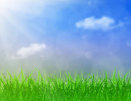 morning dew: Beautiful spring background of blue sky with grass and bokeh lights. vector background summer design  green garden nature illustration. morning sunlight grass early dew. eco background