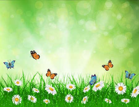 데이지 벡터 배경 여름 디자인 꽃 녹색 정원 자연 그림. 잔디와 나비, 데이지와 나뭇잎 조명 봄 배경입니다. 스톡 콘텐츠 - 54365281
