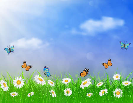 green butterfly: daisy vector background  summer design flower green garden nature illustration. Spring background of blue sky with grass and butterfly, daisies and bokeh lights.