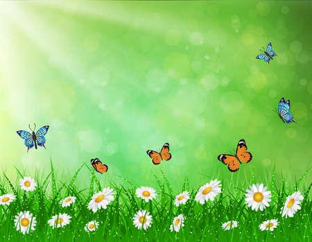 green butterfly: daisy vector background  summer design flower green garden nature illustration. Spring background  with grass and butterfly, daisies and bokeh lights.