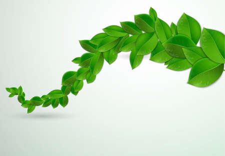 greenness: green leaves on a white background, Vector illustration of ecology concept.  Eco Concept with glossy fresh green leaves