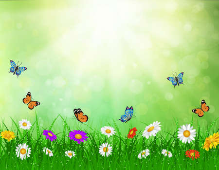 daisy vector background  summer design flower green garden nature illustration. Spring background  with grass and butterfly, daisies and bokeh lights.