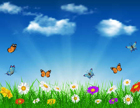 daisy vector: daisy vector background  summer design flower green garden nature illustration. Spring background of blue sky with grass and butterfly, daisies and bokeh lights.