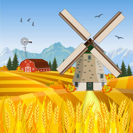 wheat fields: Cartoon beautiful fall farm scene with wheat fields. Farm flat landscape. Organic food concept for any design