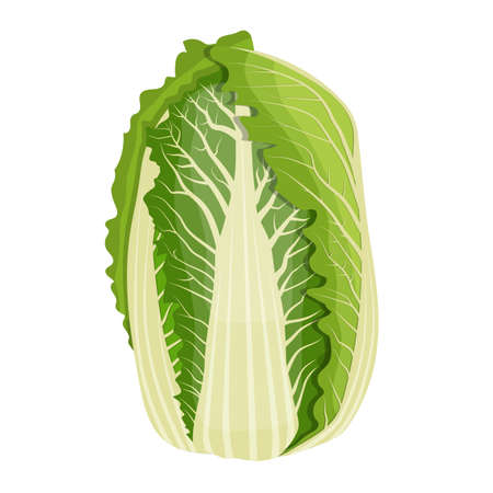 Chinese cabbage isolated on background.