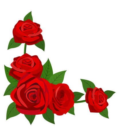 Red roses with leaves isolated on a white background