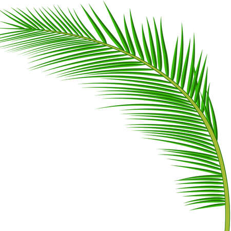 Palm leaves. Banque d'images - 81518651
