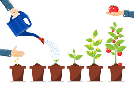 Growth of plant in pot, from sprout to vegetable. Ilustração