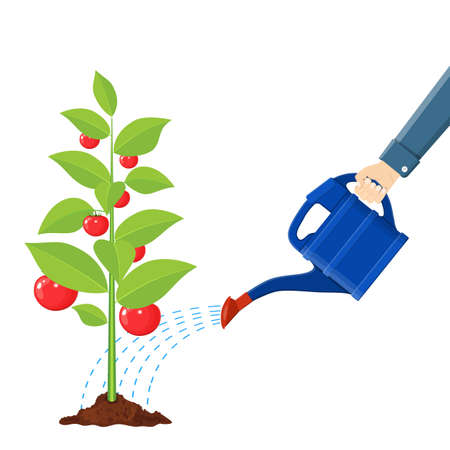 Hand watering money fruit tree with can. Illustration