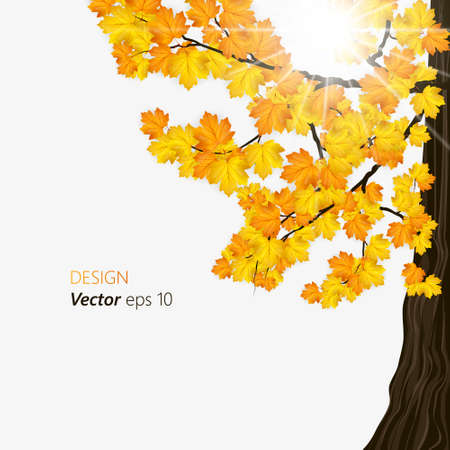 Autumnal tree with falling maple leaves. Place for text.