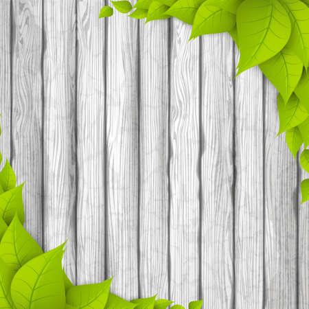 Eco Background. Green leaves on white wood board. Realistic Vector