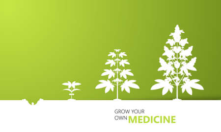 indica: Cannabis growth background concept, vector, Illustration
