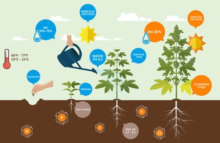 indica: Outdoor Cannabis Growing infographics.