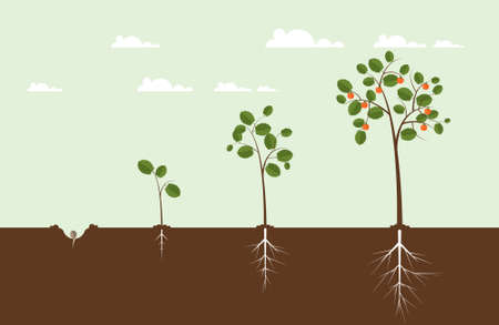 potting soil: Growing Tree Illustration