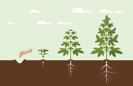 Cannabis wachsen Konzept. Vektor