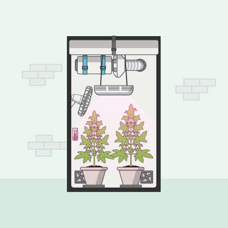 El plano Diseño, Calidad de cannabis medicinal que crece en caja de cultivo de interior. ilustración vectorial