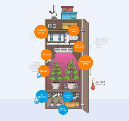 Indoor marijuana growing infographics, guide. Flat design style vector illustration.
