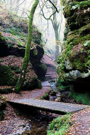 walking trail: percorso a piedi