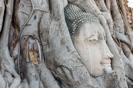 trapped: buddha statue trapped in Bodhi Tree roots at Ayutthaya, Thailand Stock Photo