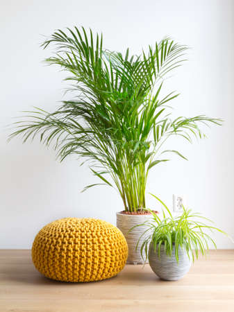 bright living room with houseplants and knit pouf on the floor Stock Photo