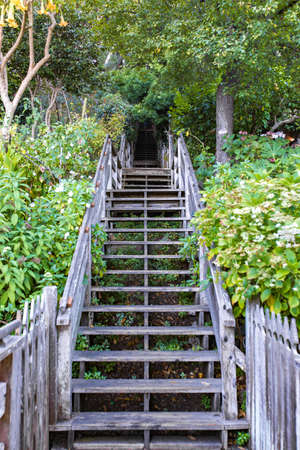 Steps with overgrowth that leads the way to the top of the hill where Coit Tower resides.