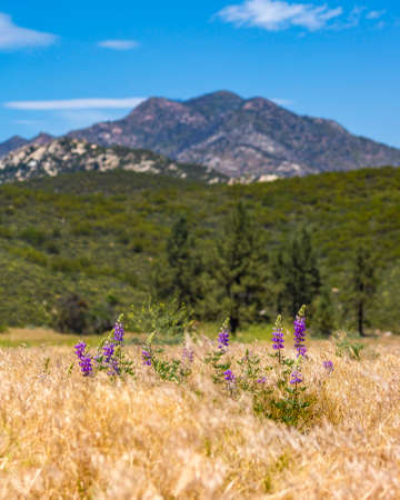 Mountain view with grass and flowers