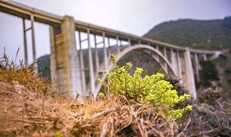 Succulent below the Bixby Bridge Stock Photo