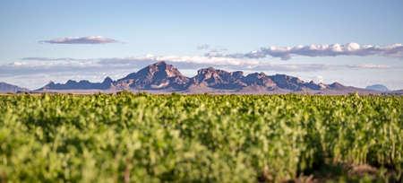 アリゾナ州に遠征で撮影草原近くの大山脈 写真素材