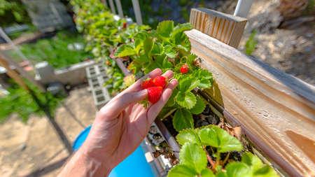 Aquaponics en Hydroponics ondersteunen zware vegetatie