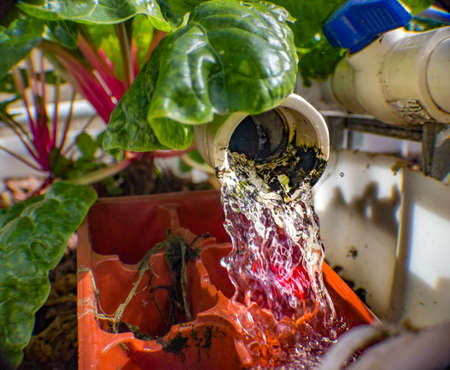 Aquaponics and Hydroponics support heavy vegetation