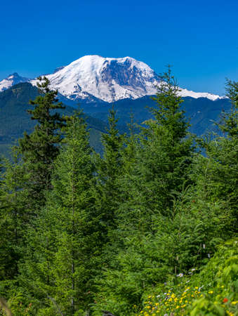 Mt. Rainier Washington State Park views of the peak over the trees. Hiking and traveling views near Mount Rainier in Washington over the summer Stock Photo