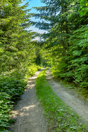 A hiking and off road path meanders along a mountain meadow on a sunny day. Hiking and traveling views near Mount Rainier in Washington over the summer Stock Photo