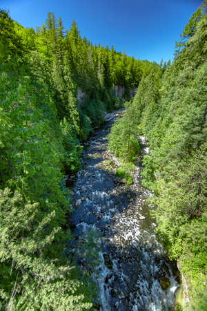 forestation: River bed among dense trees in Washington. Hiking and traveling views near Mount Rainier in Washington over the summer Stock Photo