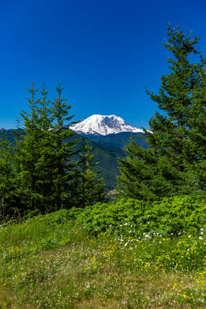 Mt. Rainier Washington State park with foliage . Hiking and traveling views near Mount Rainier in Washington over the summer