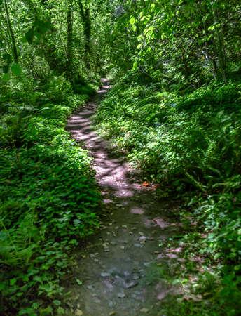 요정 녹색 숲에서 curving 경로 워싱턴, 미국입니다. 여름 동안 워싱톤의 레이니어 산 근처 하이킹 및 여행