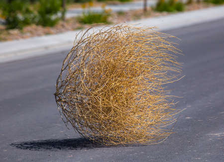 Tumbleweed n the center of a residential street Stock Photo