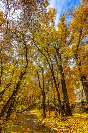 Stream and trees with golden leaves under the sky
