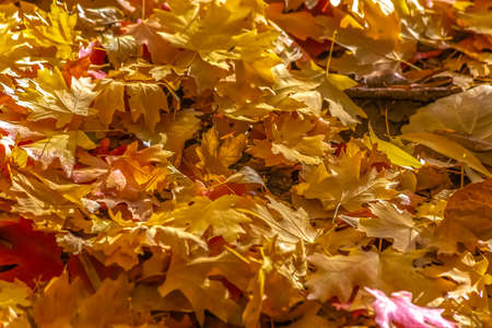 Pile of colored leaves on the ground in autumn