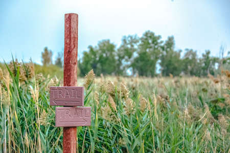 Trail sign against grasses and bright sky in Provo. Directional wooden trail sign against thick grasses, trees, and bright sky on a sunny day. Sign post on a hiking trail in Provo, Utah. 스톡 콘텐츠