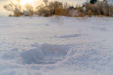 Close up of a footprint impressed on the powdery white snow covering the ground. Winter nature view with plants against a sky glowing at sunset in the background.