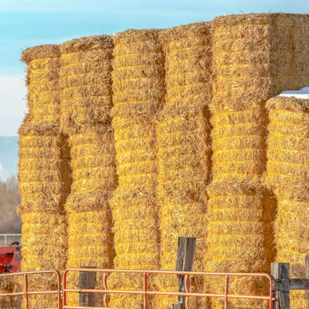 Square Blocks of hay piled inside a fenced area on a farm in Eagle Mountain Utah. A scenic background of mountain and sky can be seen on this sunny winter day. Banque d'images - 122766523