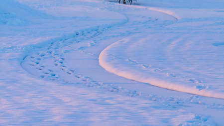 Panorama Pathway and terrain covered with snow during winter in Eagle Mountain Utah. Footprints are stamped on the curving path and snowy plants can be seen in the background.