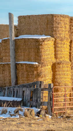 Vertical Blocks of hay piled inside a fenced area on a farm in Eagle Mountain Utah. A scenic background of mountain and sky can be seen on this sunny winter day. Banque d'images - 122767090
